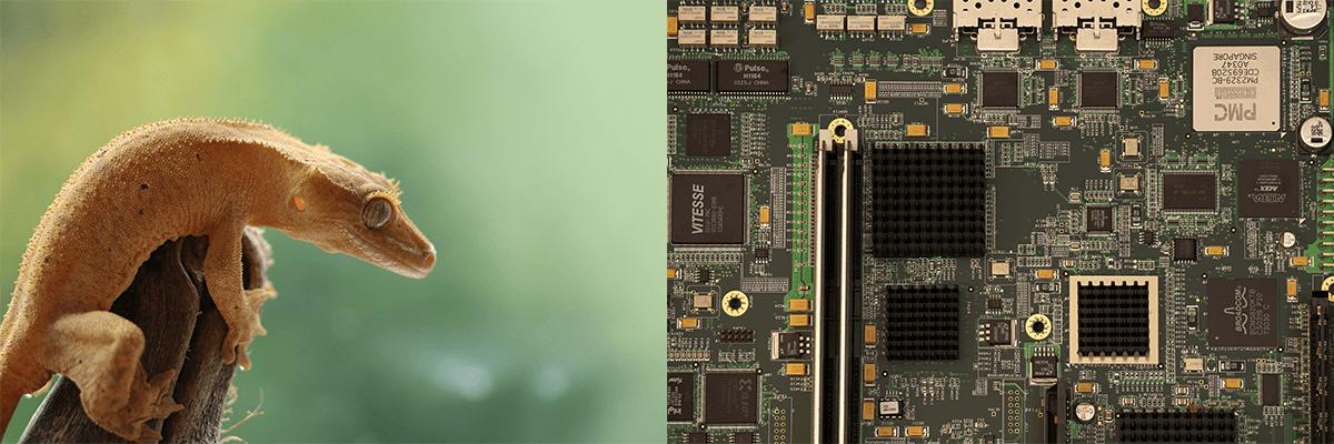 gecko – circuit board