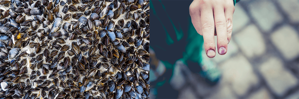 mussel bio inspiration