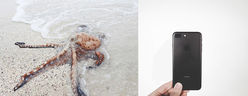 octobpus phonen