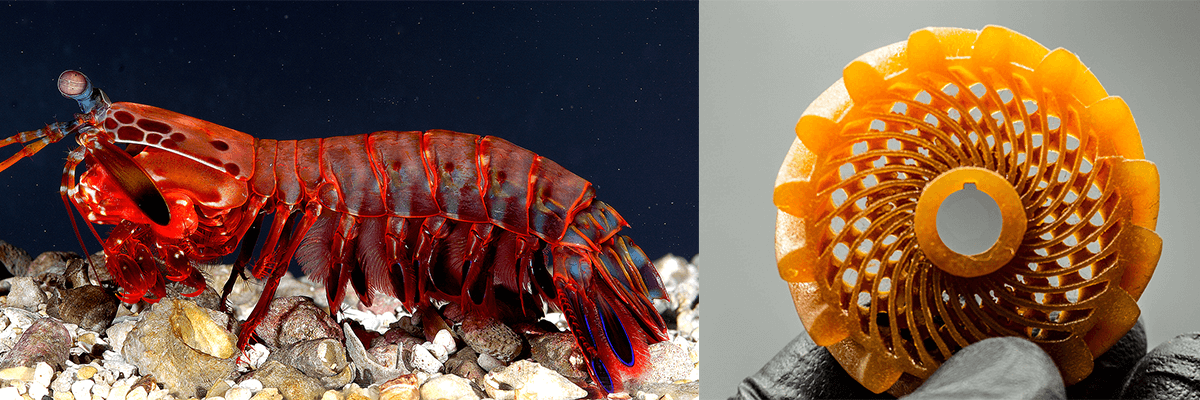bio inspired shrimp